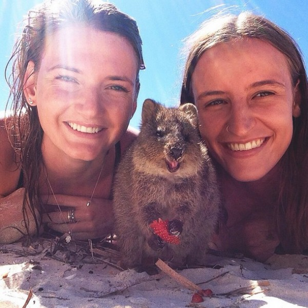 Quokka Selfie The Newest Trend On Instagram 5 E1425480068443